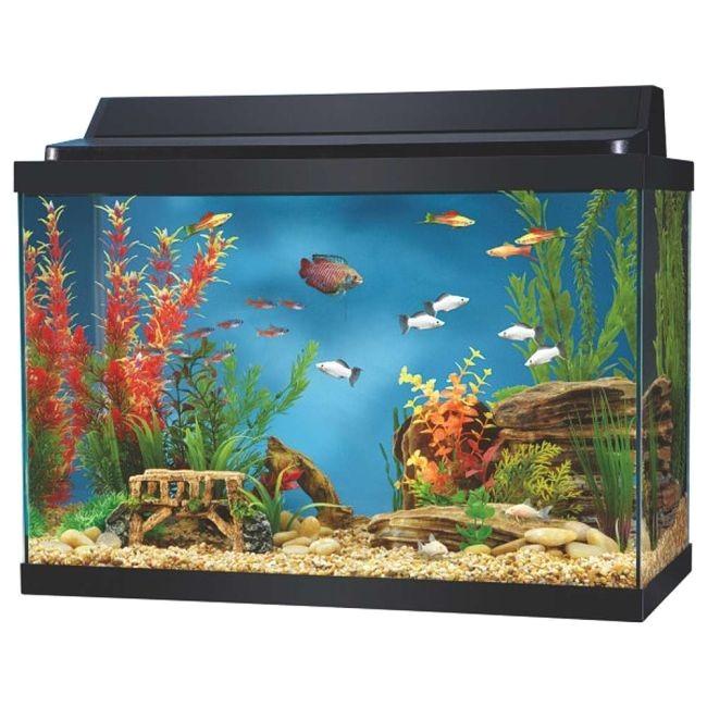 20 gallon aquarium 50 aqua culture aquarium starter kit 20 gallon walmart com