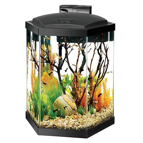 aqueon 20 gallon hex aquarium starter kit 5229838