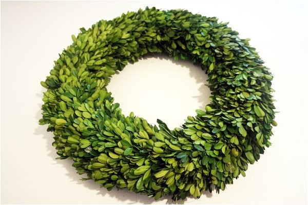garden fresh 20 boxwood wreath