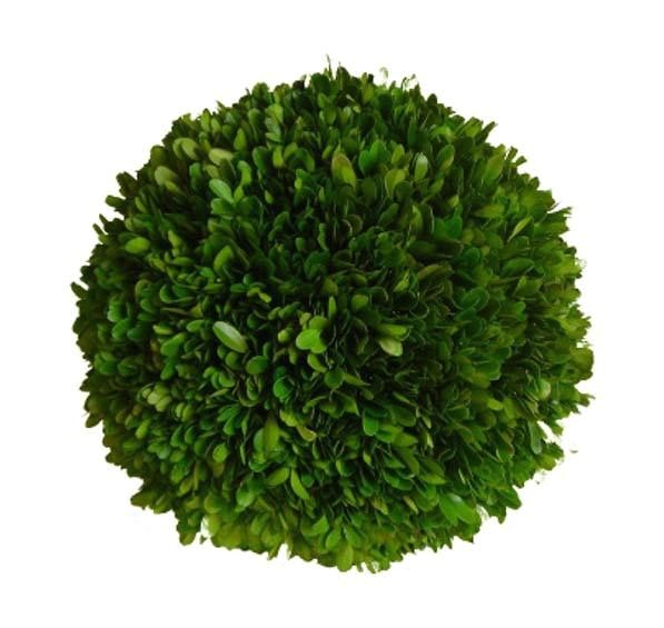 preserved boxwood ball 6