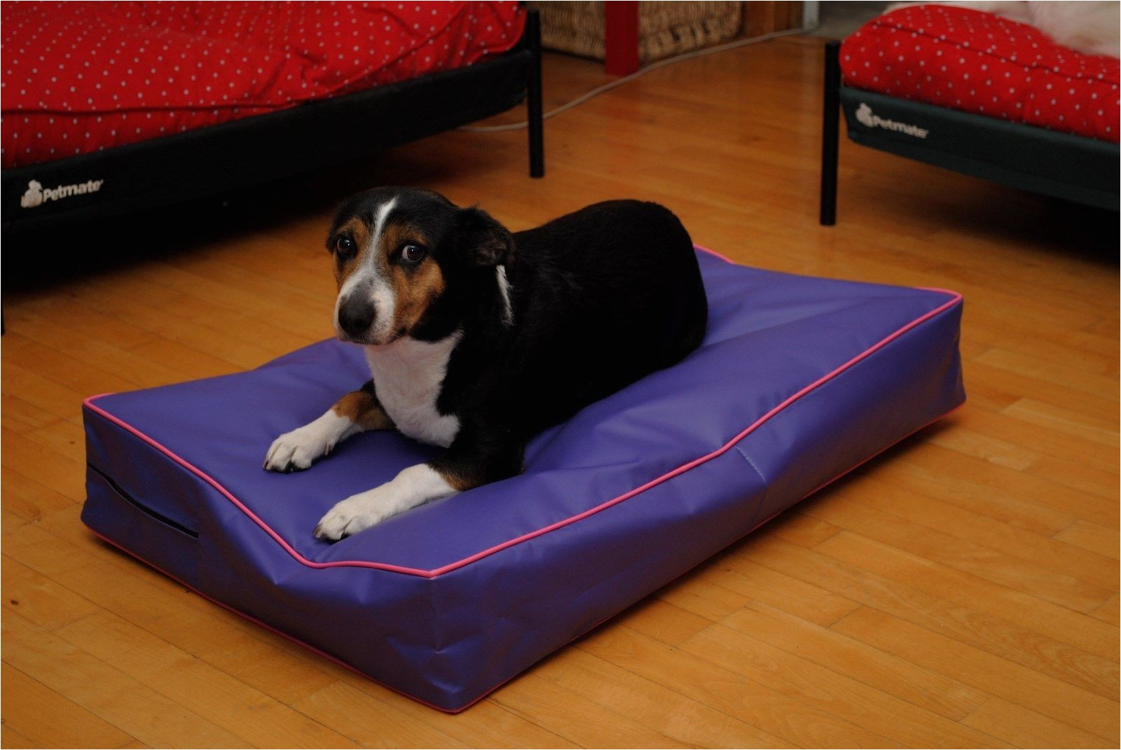 xl dog bed covers chew and dig proof by big ass dog company 1e885d6fb25c9f31