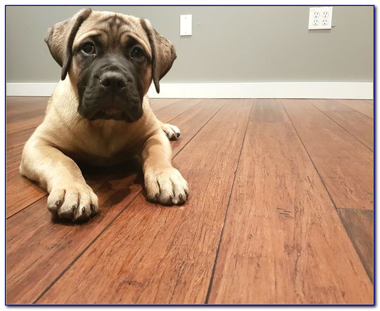 91631 bamboo flooring and dogs