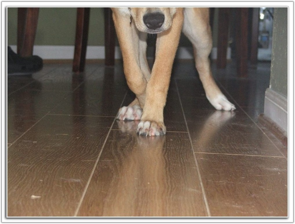 bamboo flooring and dogs urine