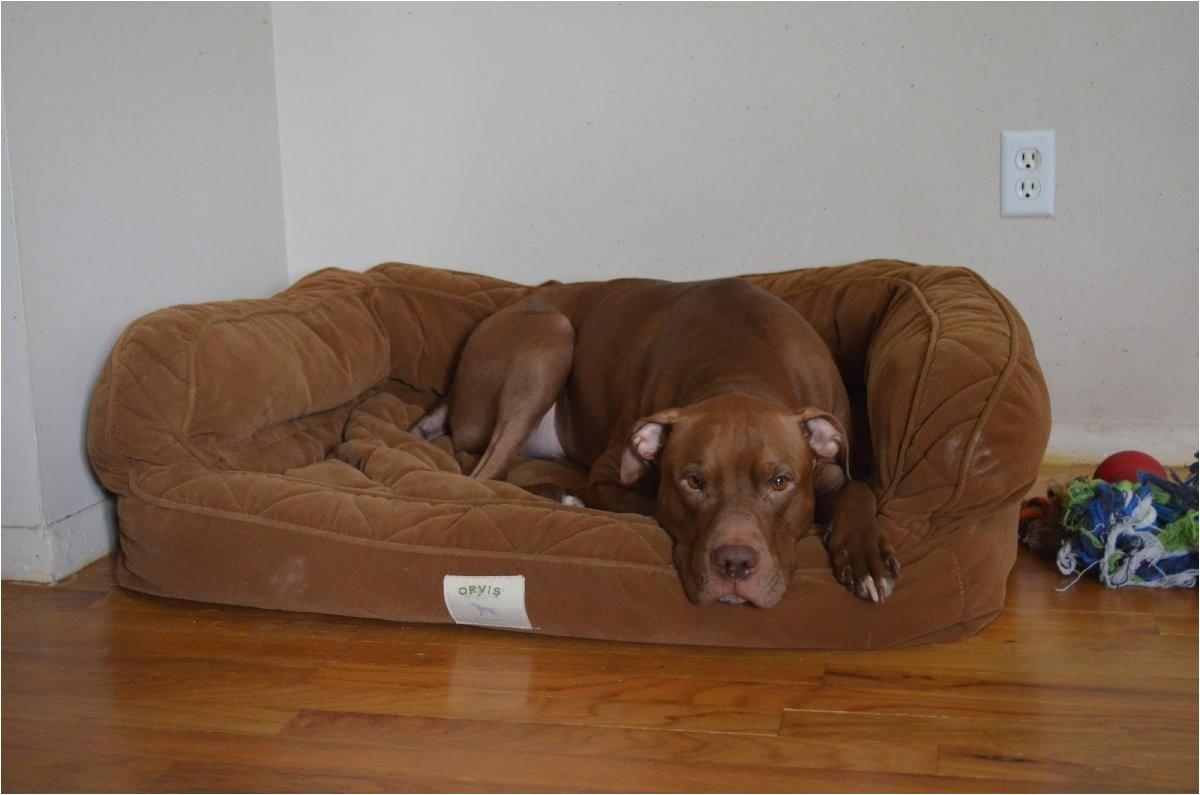 orvis bedside platform dog bed content filed under the dog beds 021ae4130a55cff0