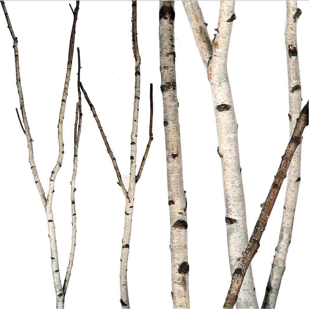 birch forks