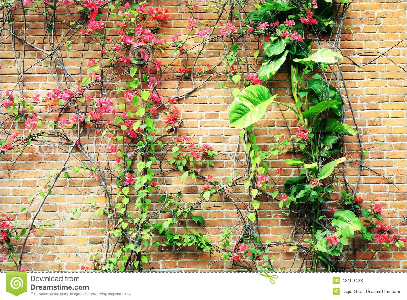 stock photo flowers brick wall background closeup old image48100428