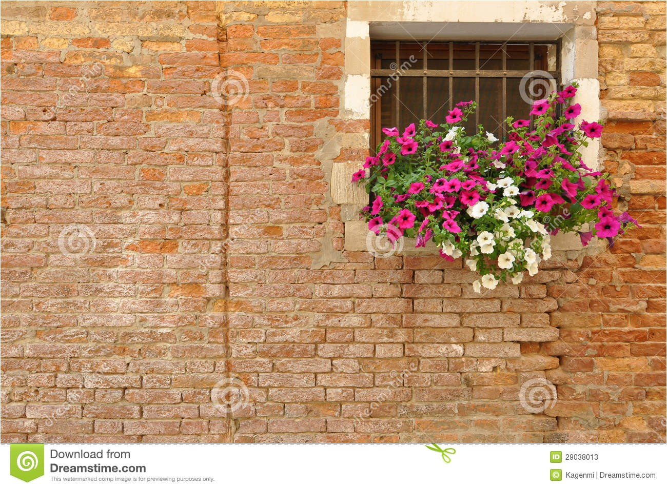 stock photos pink white petunia flowers windowsill brick italian home image29038013