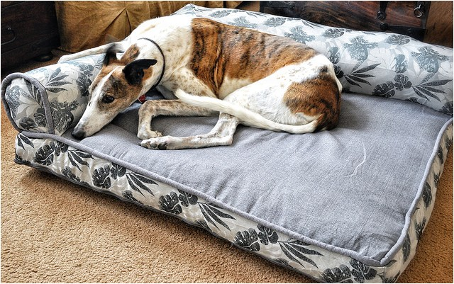 Bolster Dog Bed Costco Bolster Beds at Costco Everything Else Greyhound Greytalk