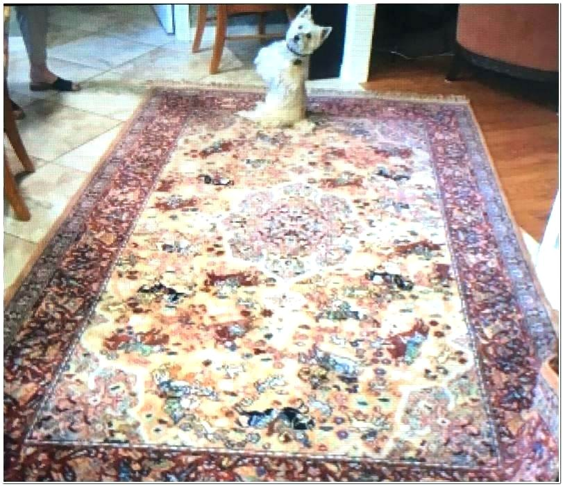 Carpet Cleaning Coupons Amarillo Tx Carpet Cleaning Amarillo Tx Rachellouise Co