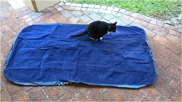 cat proof air mattress