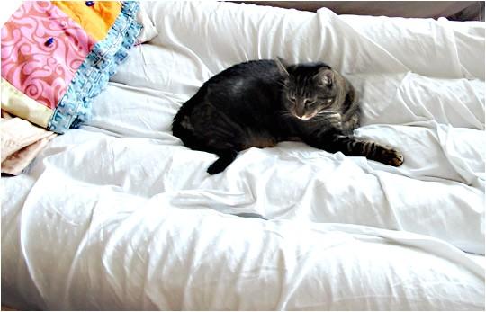 cat proof air mattress