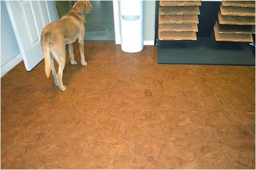 best flooring for dogs cork
