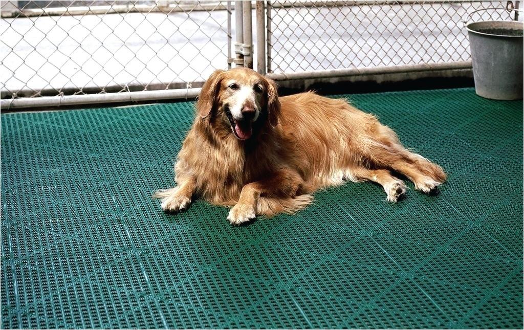 best flooring for dogs oak hardwood floors cork flooring dogs