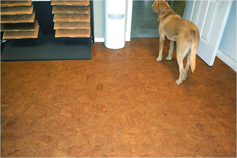 Cork Flooring Good for Dogs Best Flooring for Dogs Quiet Corner