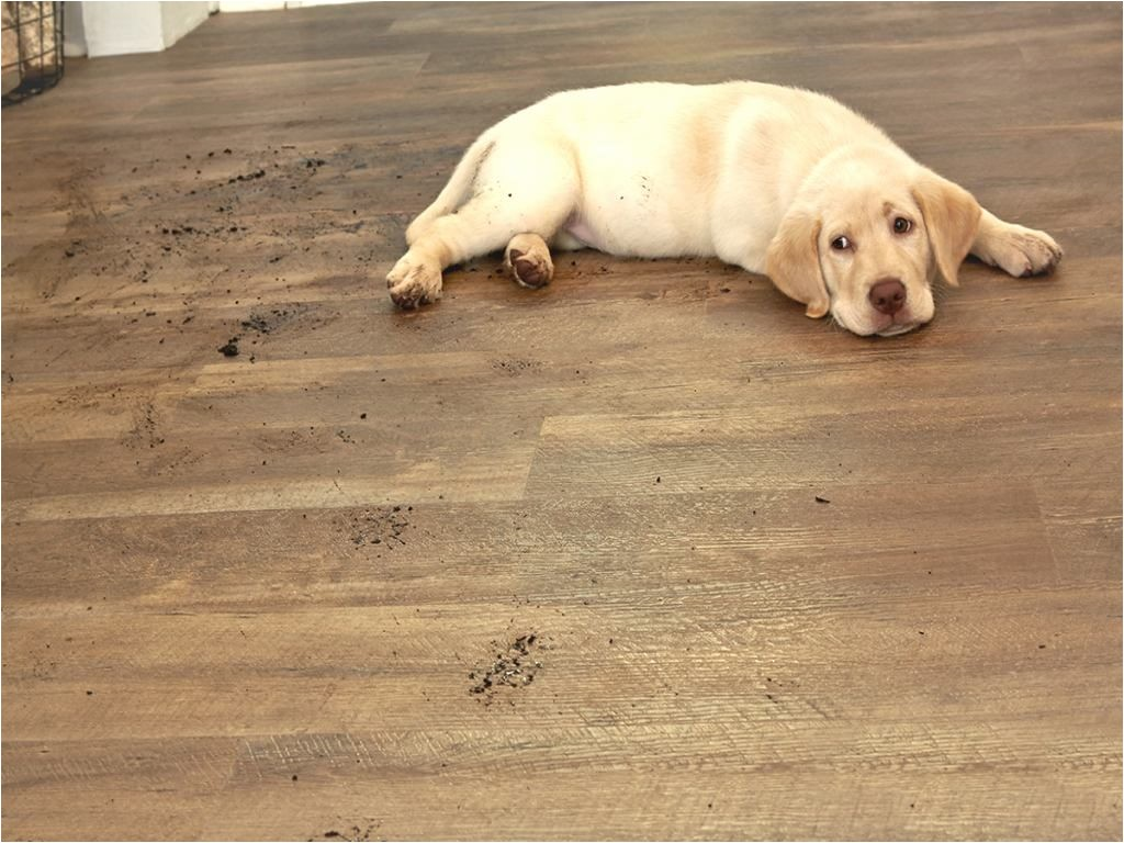 cork flooring and large dogs