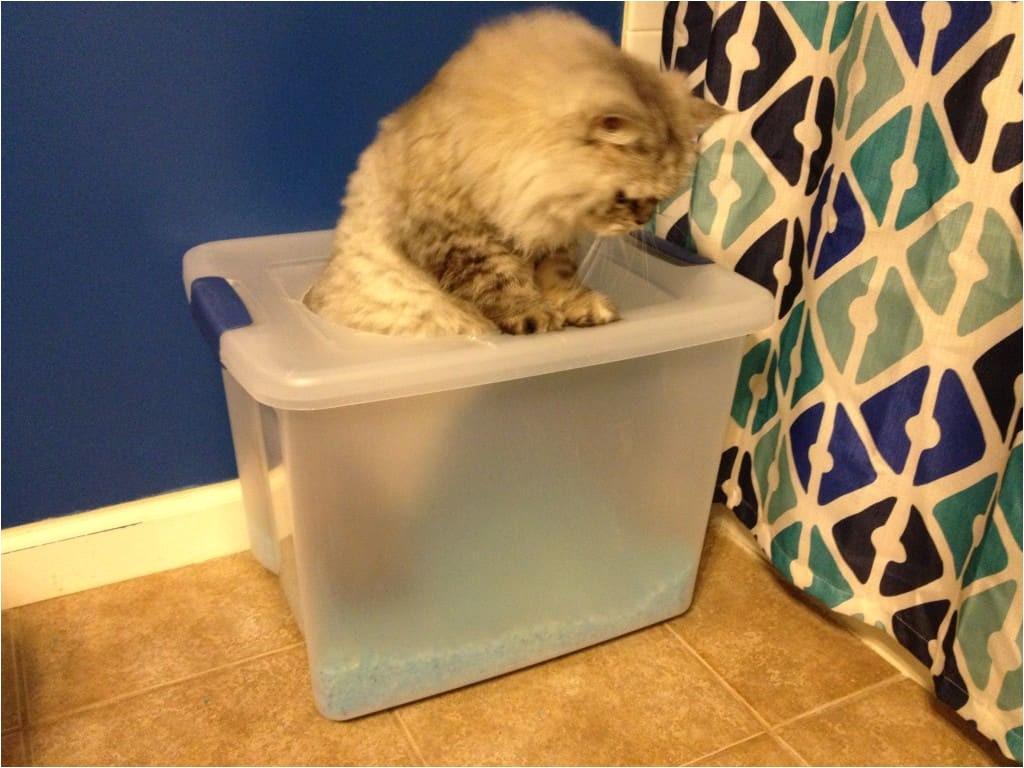 diy top entry litter box