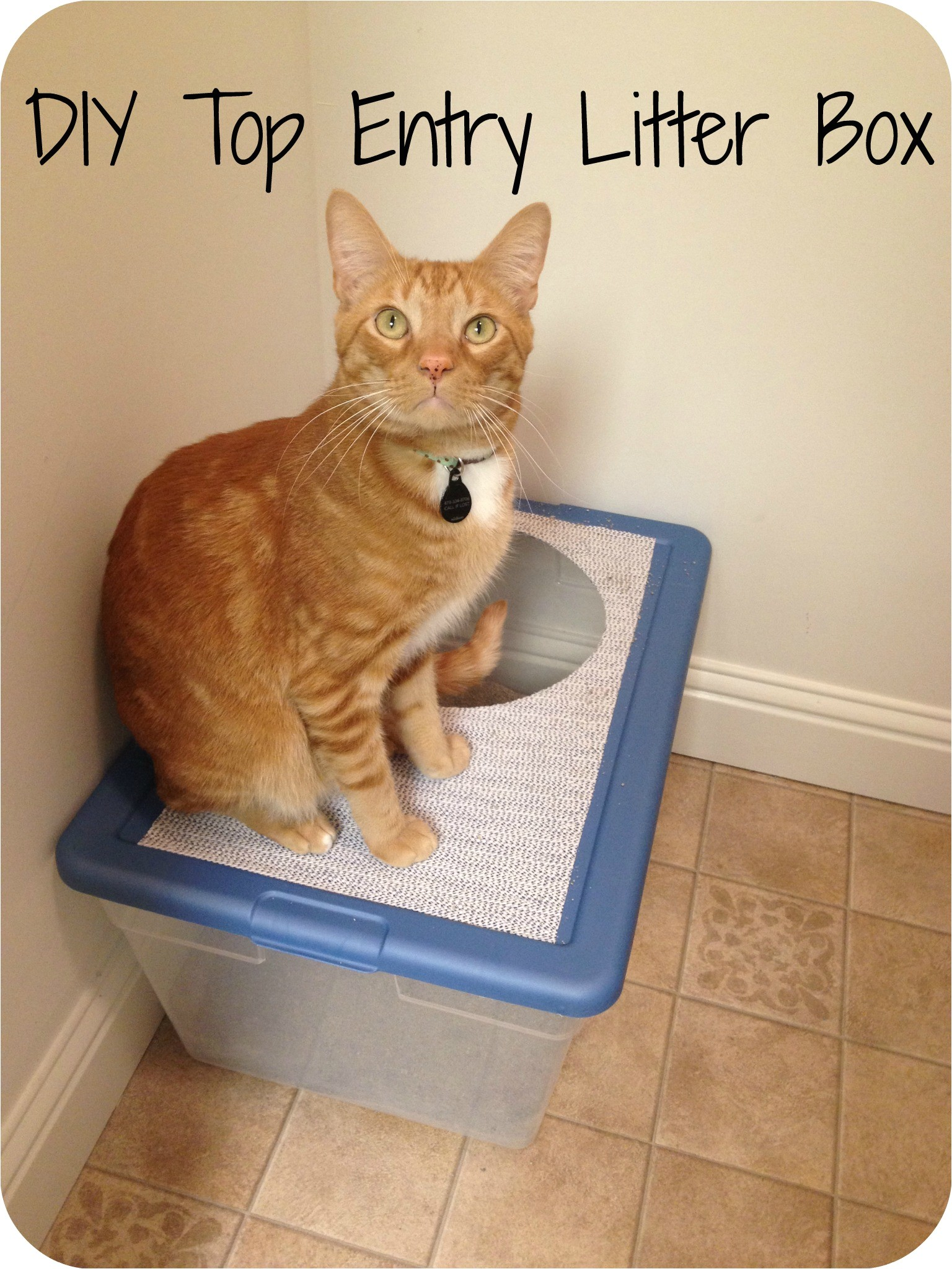 Diy top Entry Litter Box Diy top Entry Litter Box Makeover Meow