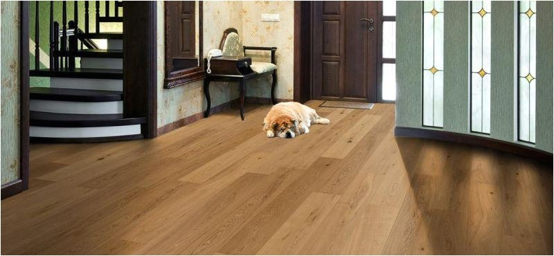 best flooring options dog owners