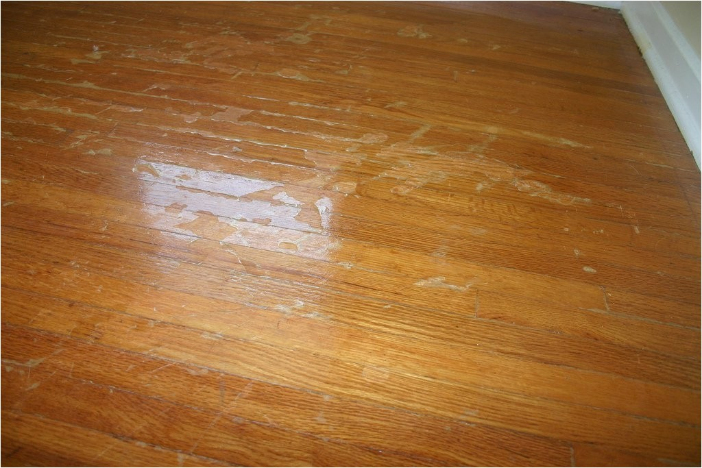 laminate wood flooring dogs