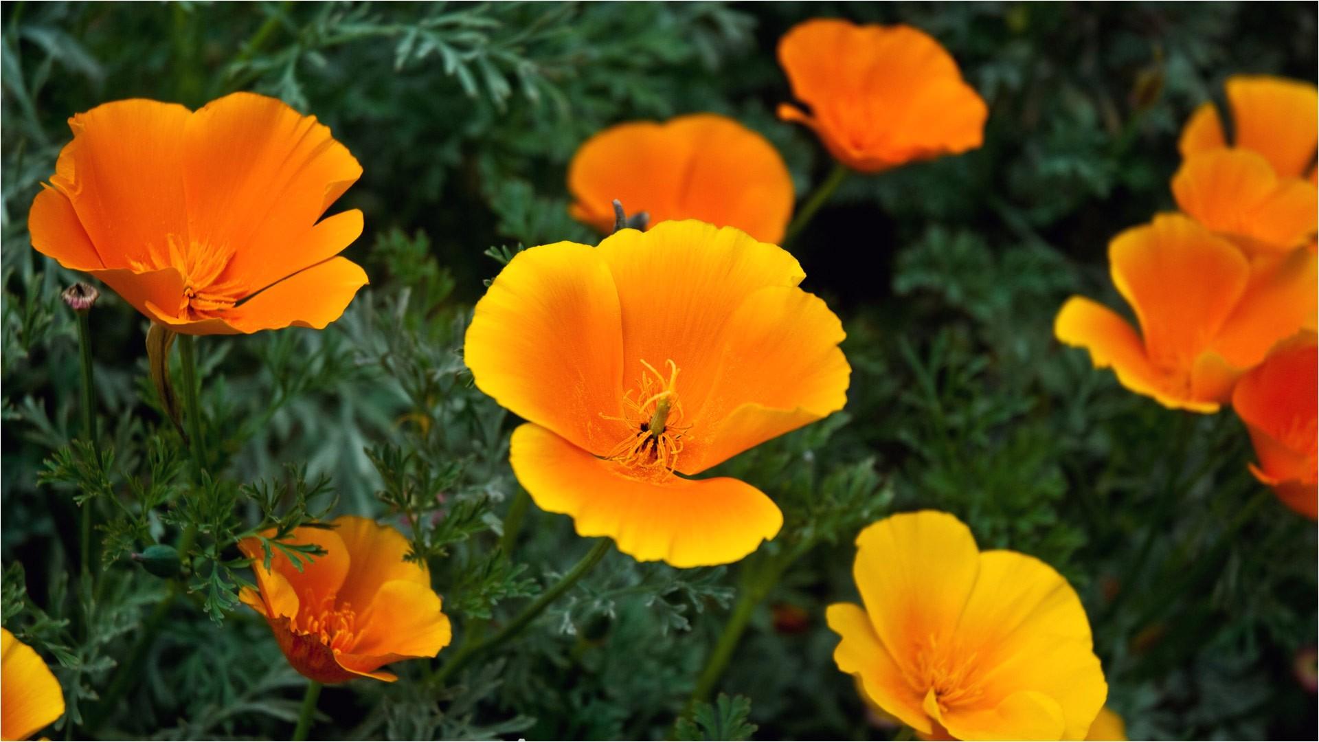 Orange Flowers Names and Pictures orange Flowers Names and Pictures