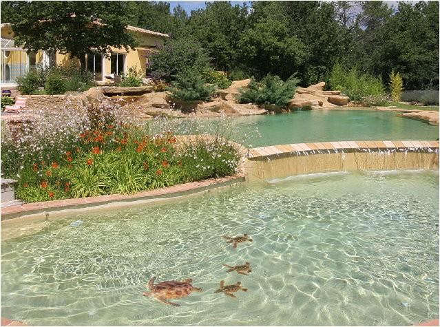 pool decal loggerhead turtle