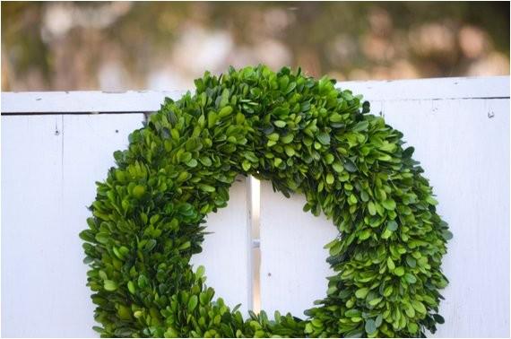 16 preserved boxwood wreath base wreath