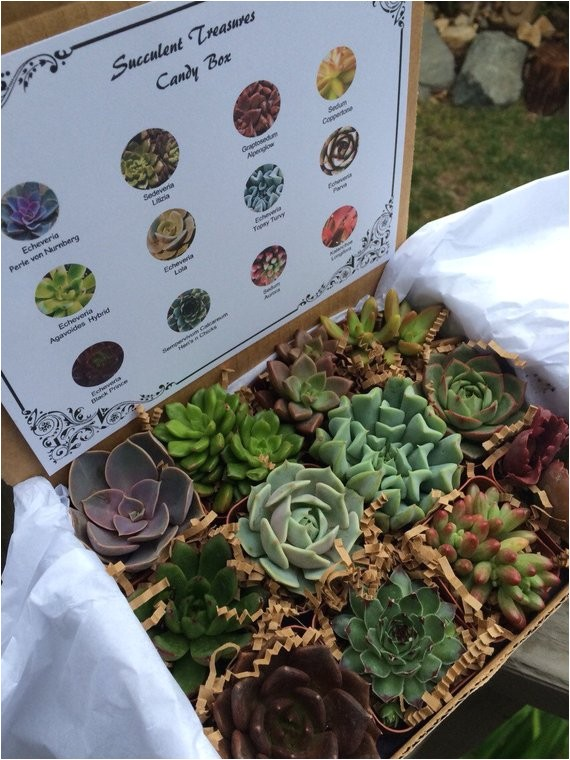 succulent treasures candy box the
