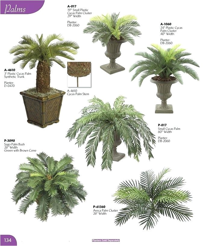 palm plant types patio plants potted palms palm tree house plant types