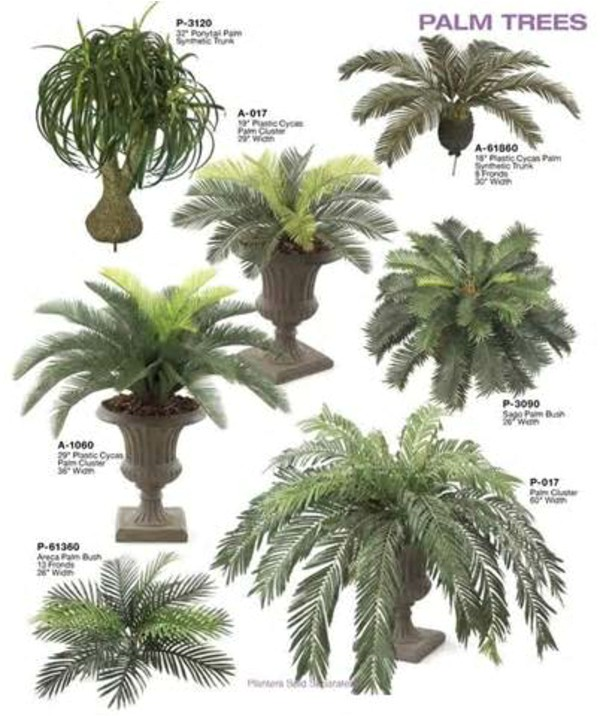 palm tree types as houseplants hardy exotic solutions