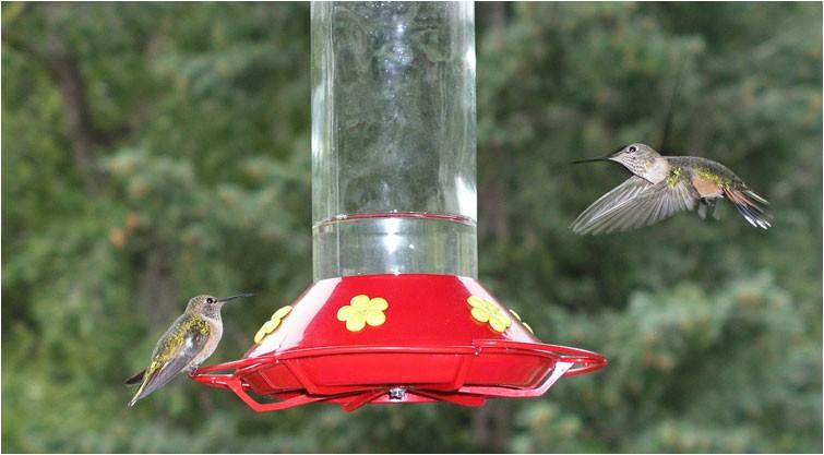 www birdhousesforsale org