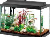 20 Gallon Fish Tank Starter Kit Aqueon Deluxe Led Aquarium Kit Black 20 Gallon Ebay