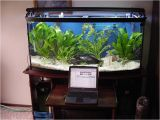 72 Gallon Bow Front Aquarium Stand Aquarium Stand 72 Gallon Bow Front by Randy