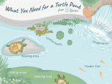 Above Ground Pond for Turtles Pet Aquatic Turtles and Outdoor Ponds