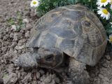 Above Ground Pond for Turtles Pin by Cal On Turtles and tortoises Pinterest tortoises
