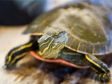 Above Ground Turtle Pond for Sale Should You Keep A Wild Turtle