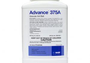 Advance Carpenter Ant Bait Home Depot Advance 375a Ant Bait Carpenter Ant Bait Free Shipping