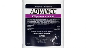 Advance Carpenter Ant Bait Label Advance Carpenter Ant Bait Free Shipping Domyown Com