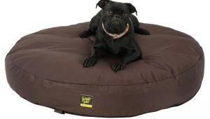 Anti Chew Dog Beds Australia Dachshund Hot Dog Bun Bed Anti Chew Raised Dog Beds Noten