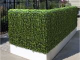 Artificial Hedges for Outdoors Outdoor Artificial Plants Outdoor Artificial Flowers Blog