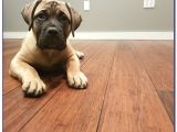 Bamboo Flooring Good for Dogs Bamboo Flooring and Dogs Flooring Home Design Ideas