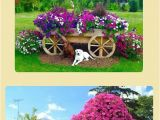 Beat Your Neighbor Fertilizer Amazon 13 Best Gardening and Landscaping Images On Pinterest Garden Ideas