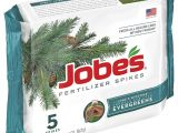 Beat Your Neighbor Fertilizer Amazon Amazon Com Jobe S 02711 Evergreen Tree and Shrub Spikes 160 Case