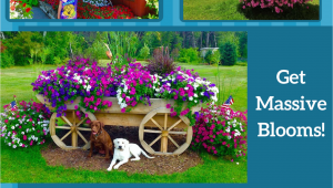 Beat Your Neighbor Fertilizer Home for Beat Your Neighbor Plant Food Fertilizer My Garden