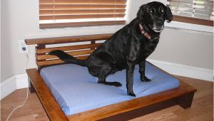 Bedside Platform Dog Bed Plans orvis Pet Beds Cvs Dog Beds Dog Beds U Gallery Dog
