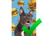 Best Dating Sites for Animal Lovers Dog Art Cat Art Custom Pet Pop Art Pop Your Pup