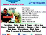 Best Pest Control toms River Nj Ozane Termite Pest Control toms River Nj 08755