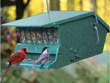 Birds Choice Bird Feeders Bird Feeder Christmas Gifts for the Home