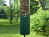 Birds Choice Classic Bird Feeder with Squirrel Baffle and Pole Bird Feeder Poles Hangers Webnuggetz Com