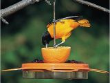 Birds Choice Flower oriole Bird Feeder Small orange Duncraft Com Birdschoice oriole Fest Feeder
