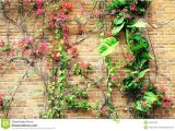 Blossoms On the Bricks Flower Flowers Red Brick Wall Stock Photo Image Of